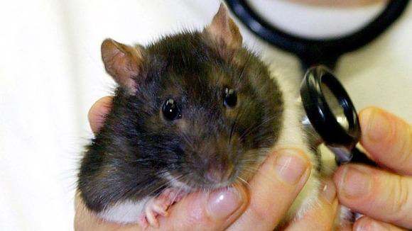 Petco Rats Petco Lawsuit Follows ...