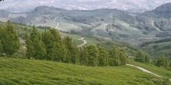 Sochi tea plantations