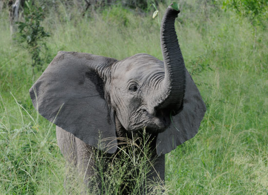 Elephant May Prove Human Connection