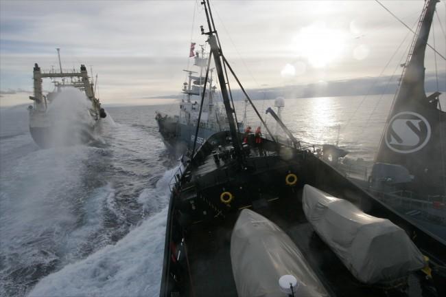 Whaling in Japan International Disgrace With Sea Shepard
