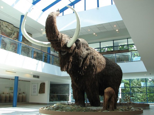 Woolly Mammoths Probably Became Extinct Because of Wildflowers
