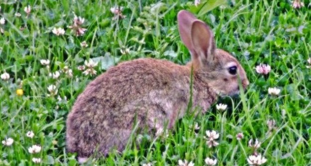 Bunnies Unearth a Stone Age Goldmine