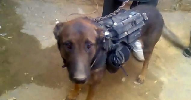 Taliban Claims to Capture Military Canine