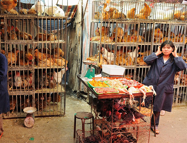 bird flu in China
