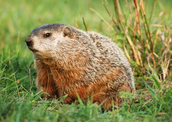 Groundhog Day Reveals Six More Weeks of Winter