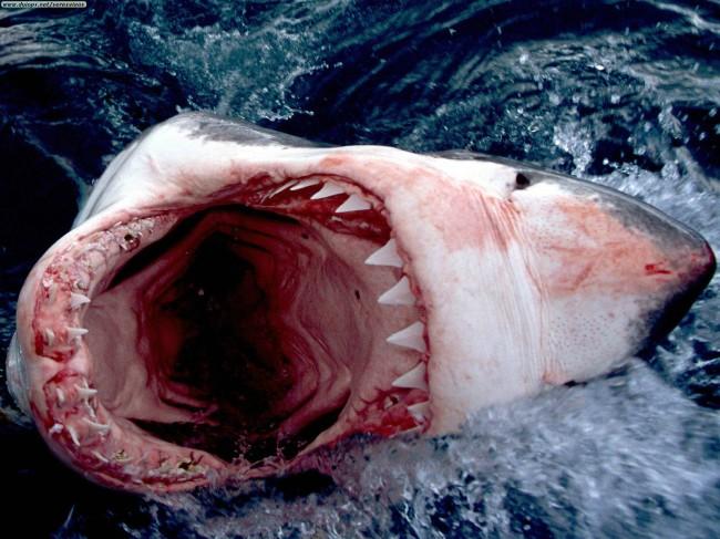 Shark attacks surfer in NZ