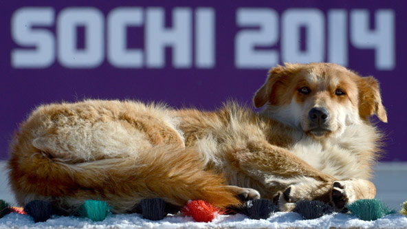 Sochi Olympics Journalists Tweet About Sochi Problems