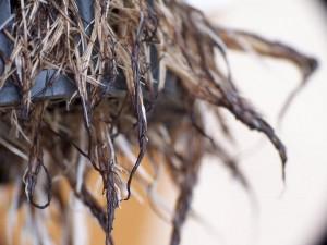 Food, hydroponics, root rot