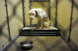 Animal Abuse a Felony in All 50 States