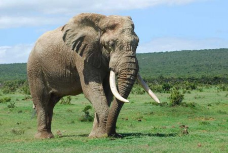 Drones in Kenya to Combat Elephant and Rhino Poaching 2
