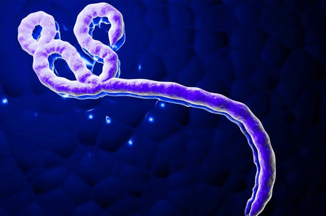 Ebola Virus May Have Spread to Canada