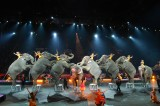 Elephants Escape From Circus