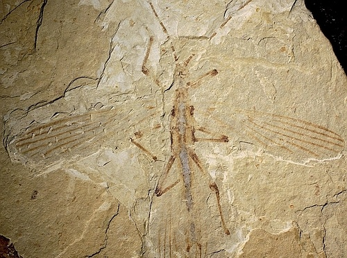 Fossils of Insect Discovered That Lived 126 Million Years Ago and Imitated Plants