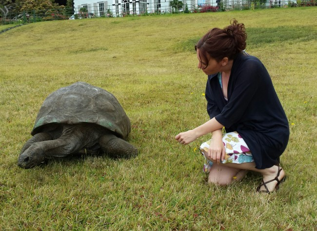 World's Oldest Known Living Land Creature Is Tortoise Named Jonathan