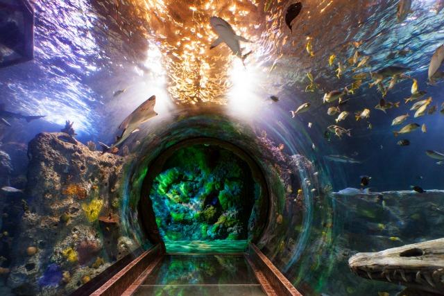 mall-based aquarium