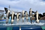 Proposed Bill to Ban Orca Shows at SeaWorld San Diego Receives Criticism