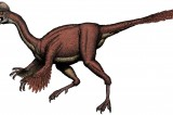 Strange Birdlike Type of Dinosaur Discovered Called Chicken From Hell