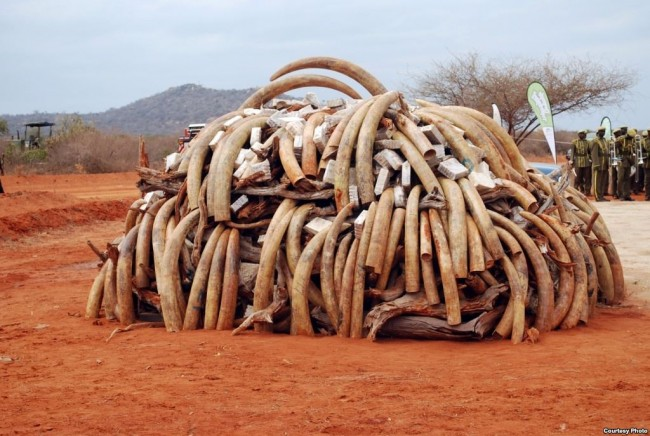 illegal wildlife trade booming with poaching of endangered species