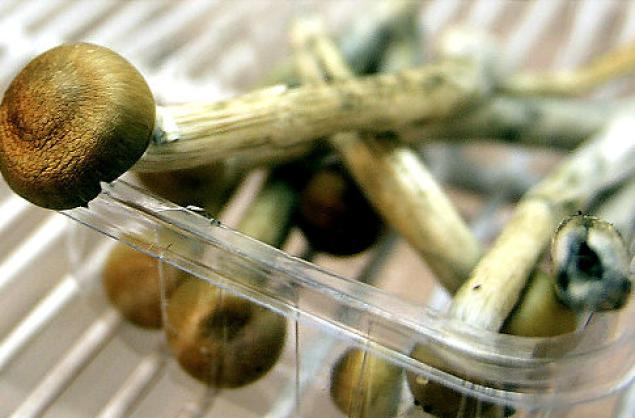 Magic Mushrooms Found to Treat Illness