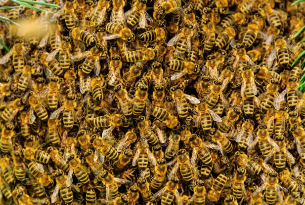 Bees Buzz Week