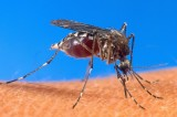 Malaria Makes a Comeback as Climate Warms