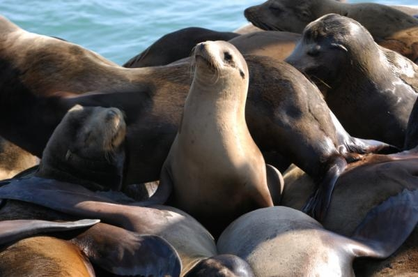 Epilepsy Found in Sea Lions Similar to Humans