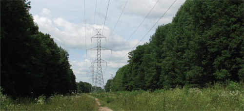 Most Mammals and Birds See Power Lines as Chains of Flashing light