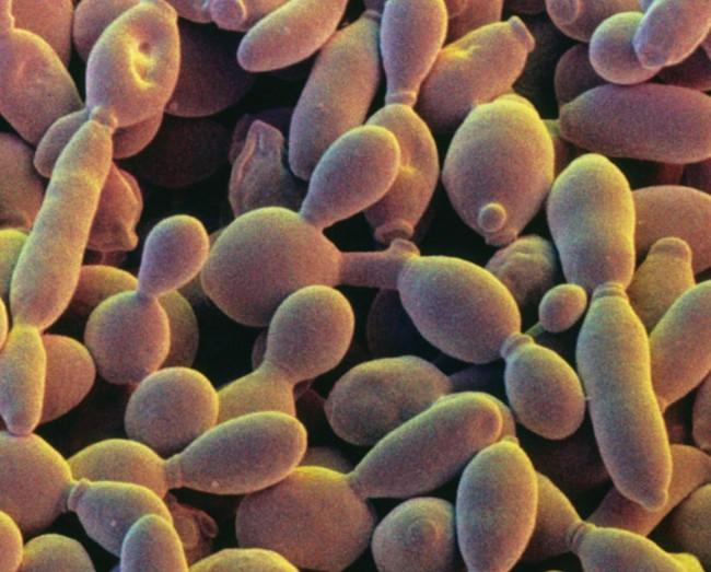 synthetic chromosome