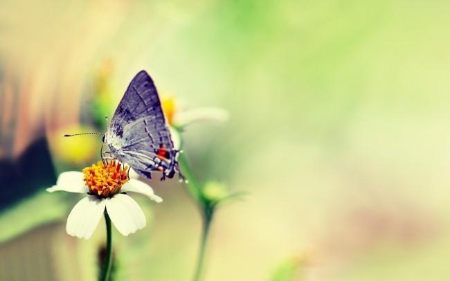 insect, insects, University of California Riverside, UC Riverside, entomology, entomologist