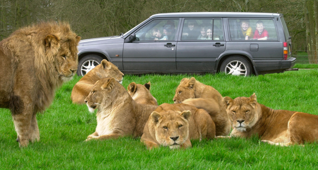Burn Alive or Get Eaten by Lions: How Much Worse Can a Family Day Out Get?