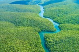 Amazon Rainforest Restoration Ideas