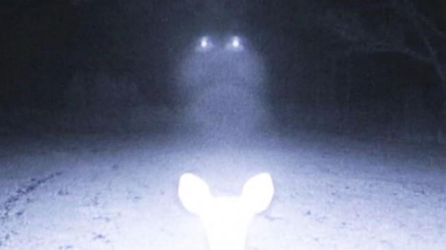 UFO deer