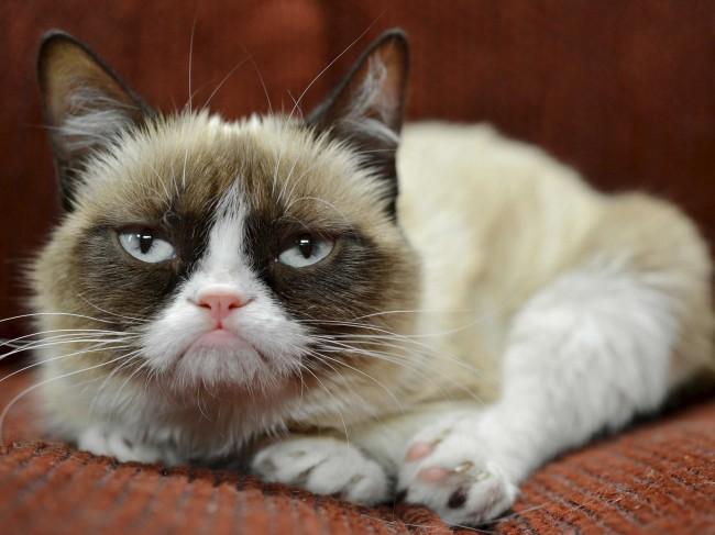 Grumpy Cat Frisky for Endorsement