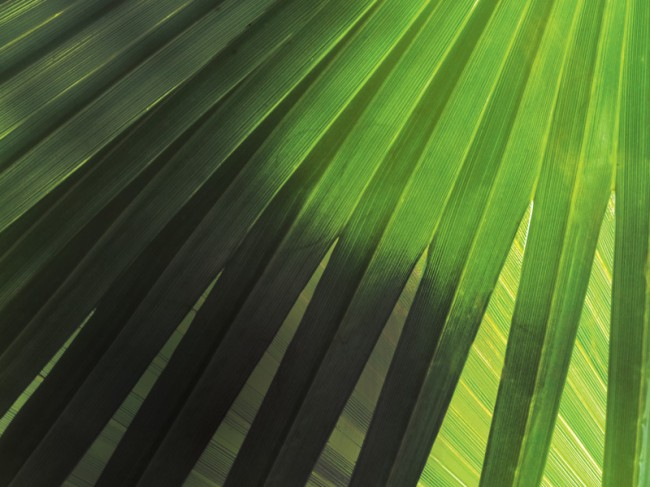 Holy Week Palm Sunday