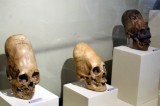 Paracas Elongated Skulls New DNA Tests Reveal Shocking Information