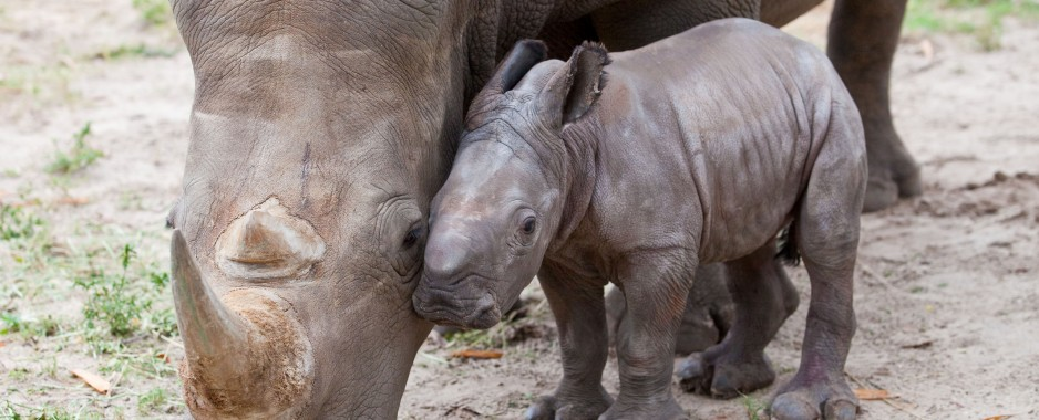 Philanthropist Howard G. Buffett Donates $23.7 Million to Help Rhinos