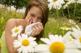 Ragwitek Approval May Be an Alternative to Shots for Ragweed Allergies