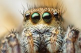 Spiders Are Cooler Than You Think