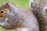 Squirrel Caused $300,000 in Damages to McMillen Park