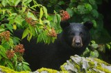 Florida Hunts for Bear That Mauled Woman