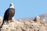 Endangered Species Act Protects and Conserves