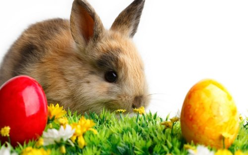 History of the Easter Bunny · Guardian Liberty Voice