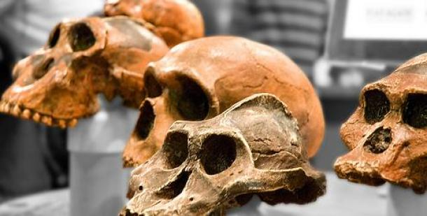 Evolution: Research Finds Mutations Continue
