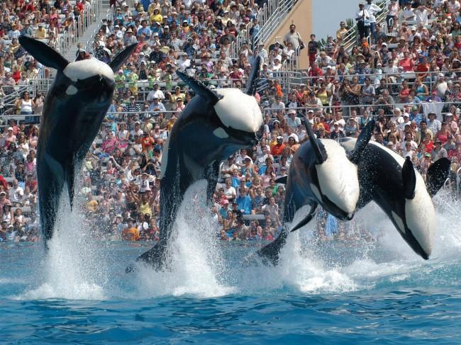 orca, california