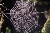 Spider Silk Unusually Useful Uses