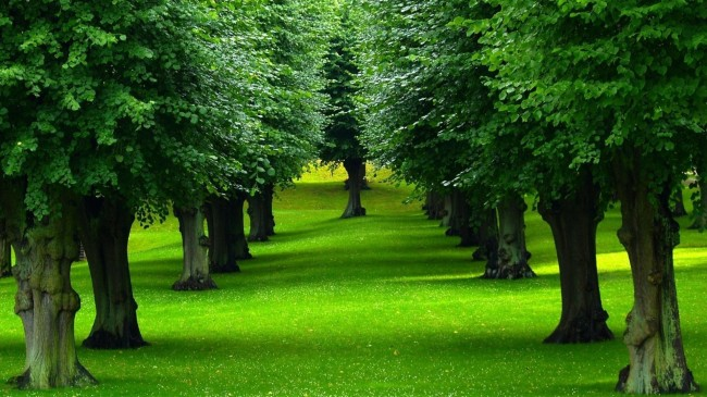 Trees Replace Graves to Curb Global Warming