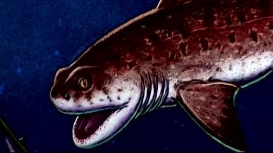 Godzilla shark