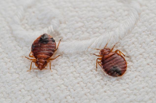 Build a Better Bedbug Trap for $1 [Video]