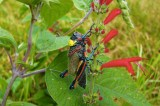 Colorful New Grasshopper Named After Lila Downs