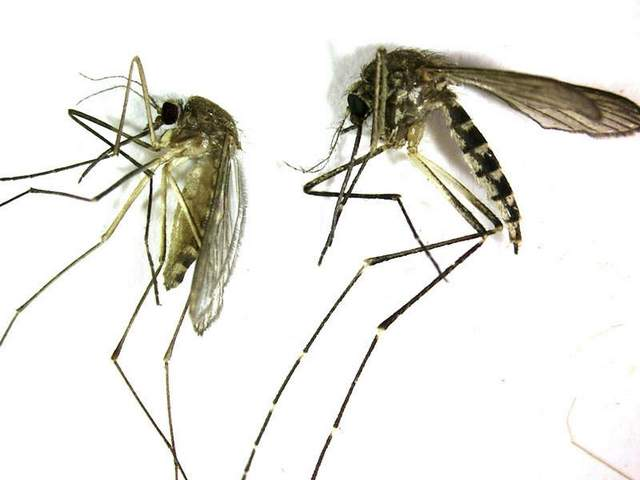 Three States Have Already Reported First Cases of West Nile Virus This Year